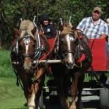 Horse-Wagon